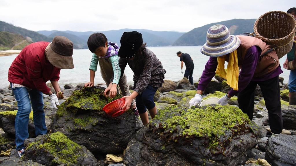 奄美国直集落の体験ツアー:アオサ摘み