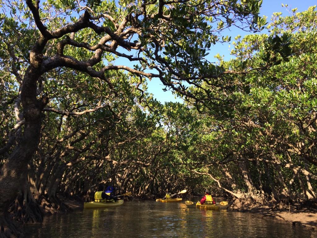 奄美黒潮の森マングローブパークのアクティビティ
