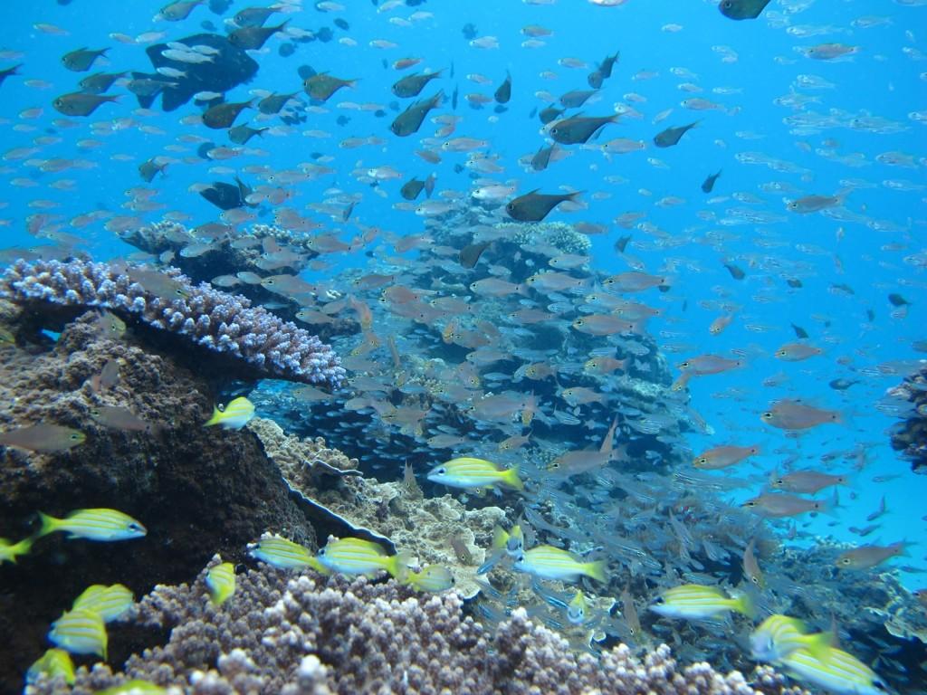 珊瑚礁と魚の群生