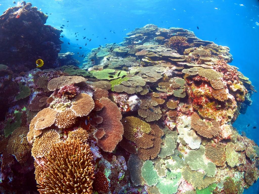 大きな珊瑚礁、奄美