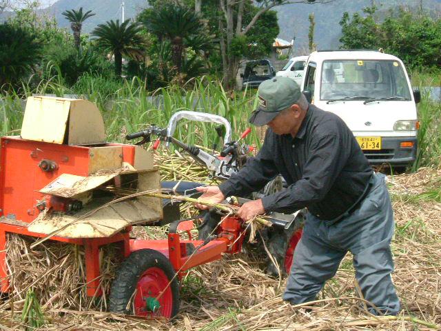 サトウキビを収穫する男性