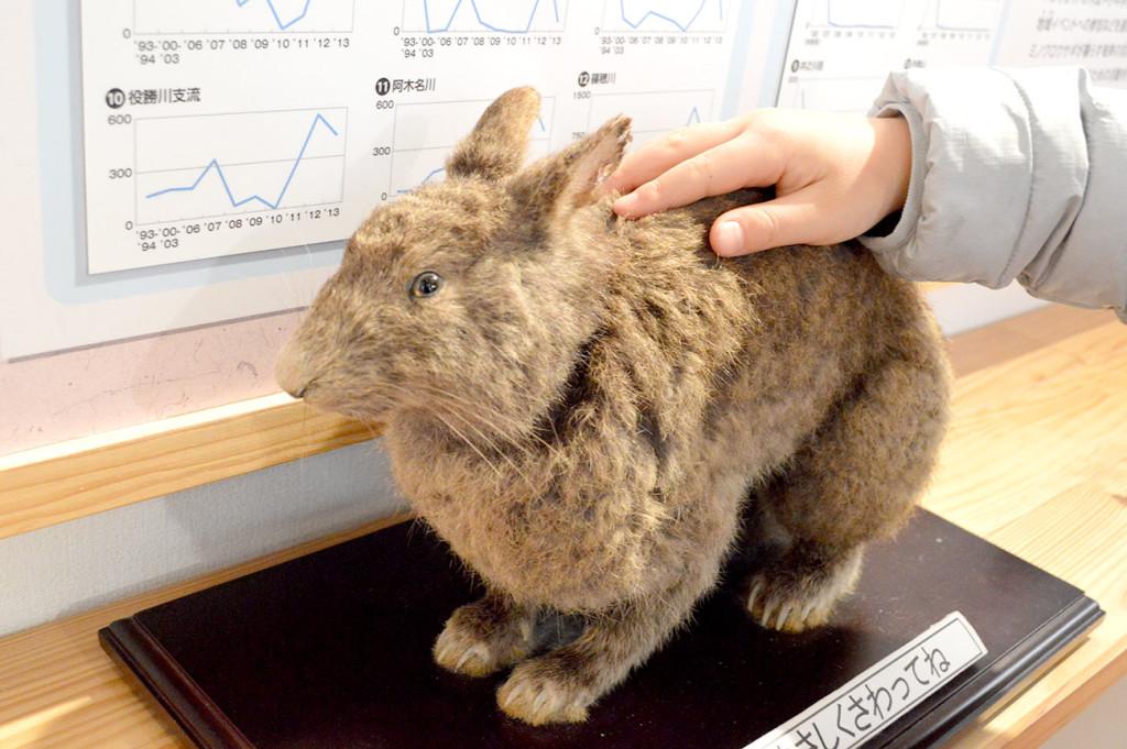 アマミノクロウサギの剥製を触る子供