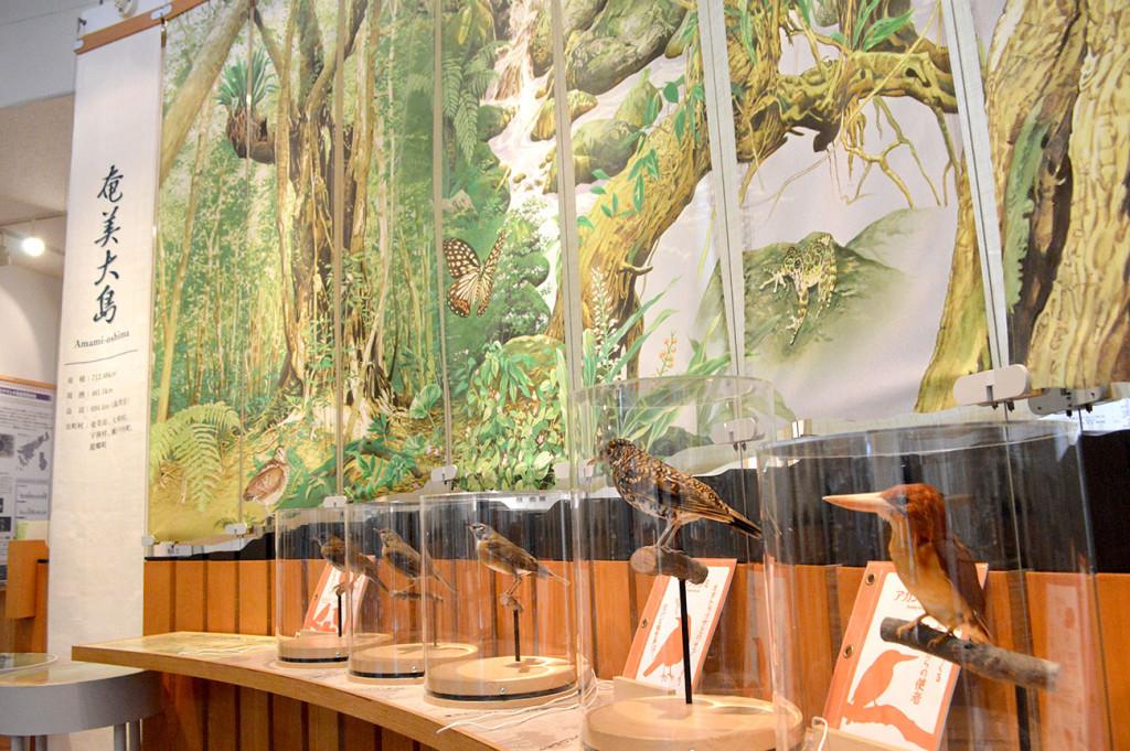 環境省奄美野生生物保護センターの鳥の剥製