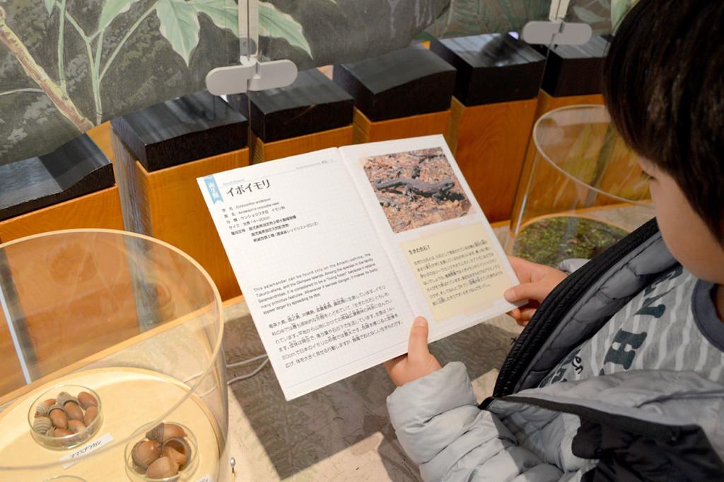 環境省奄美野生生物保護センターの資料を読む子供