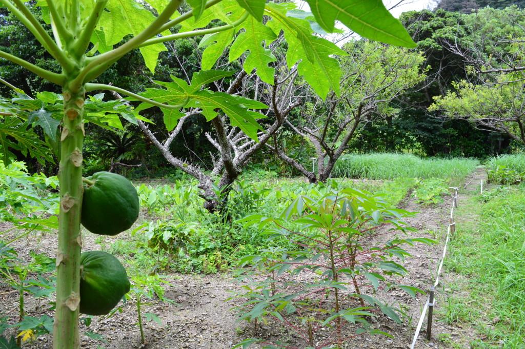 有機栽培の自家菜園