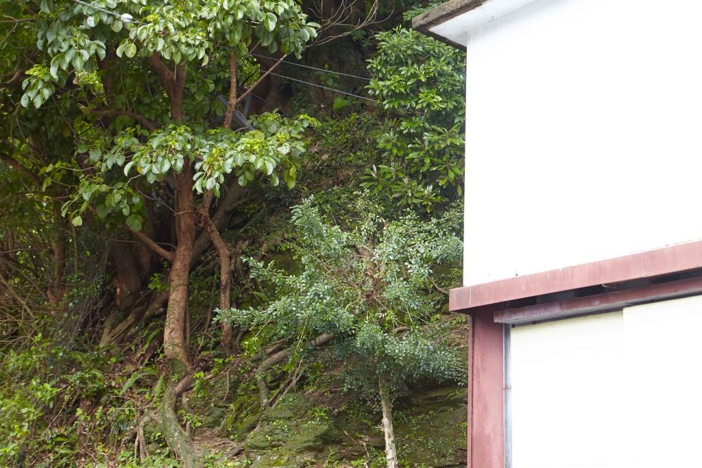 富田酒造場の裏手は山