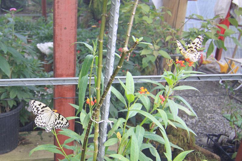 奄美ビッグツーのFull Fula Garden(フルフラガーデン)の蝶ハウス