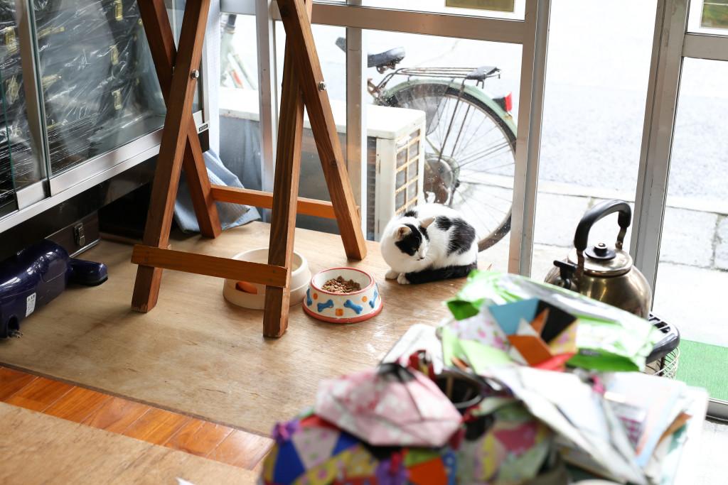 店に入ってきた猫