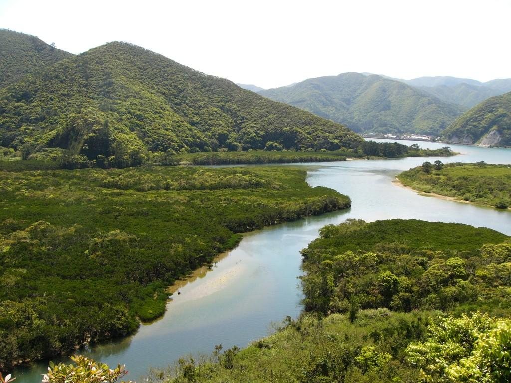 日本で2番目の面積を有するマングローブ原生林