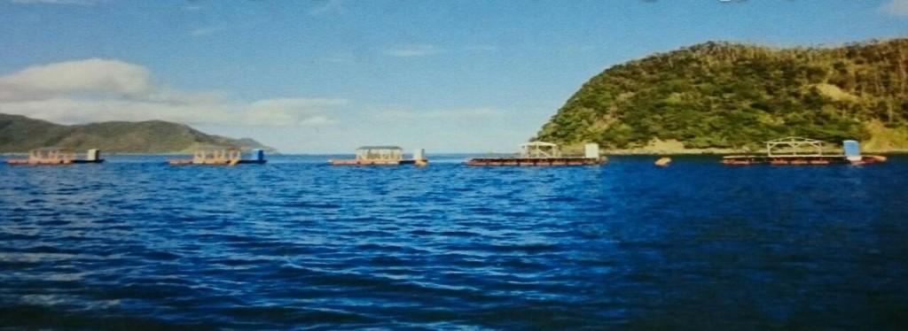 宇検村の釣りイカダ