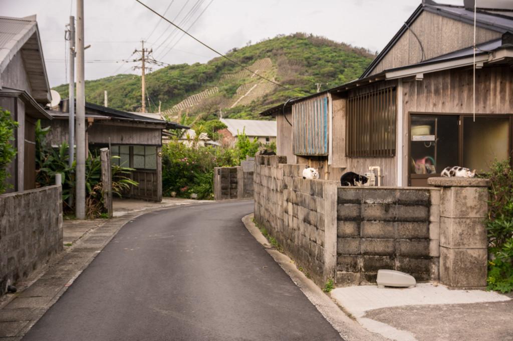 奄美、佐仁集落ののんびりとした風景