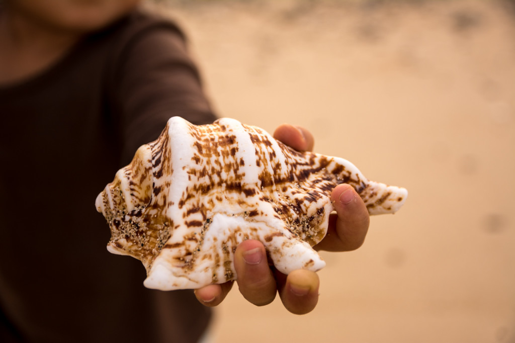 奄美、佐仁集落近くの海で拾った大きな貝殻