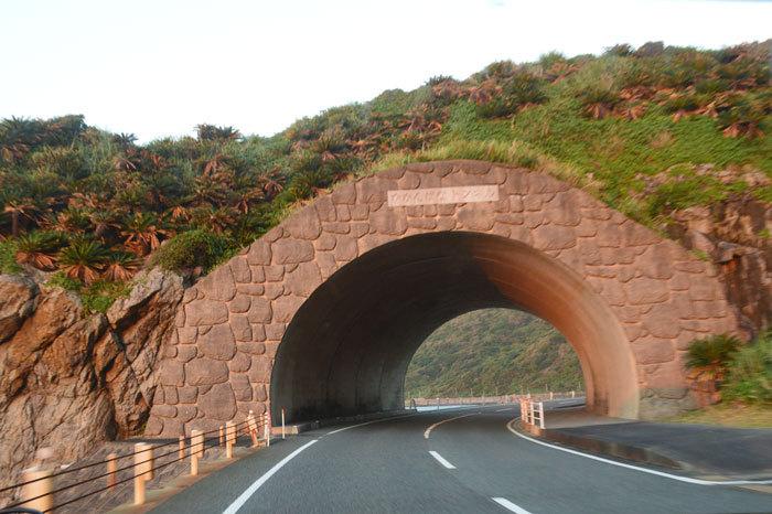 龍郷町円集落のカガンバナトンネル