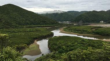 奄美大島の希少植物に出会える、住用の隠れギャラリー「わだつみ館」