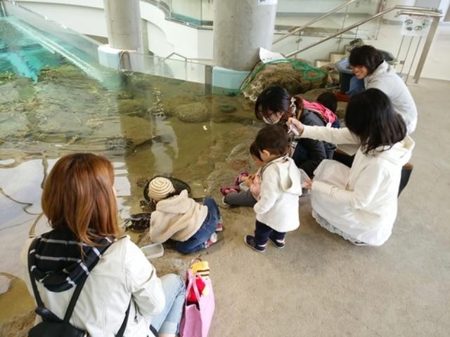 奄美海洋展示館、大人気のウミガメのえさやり