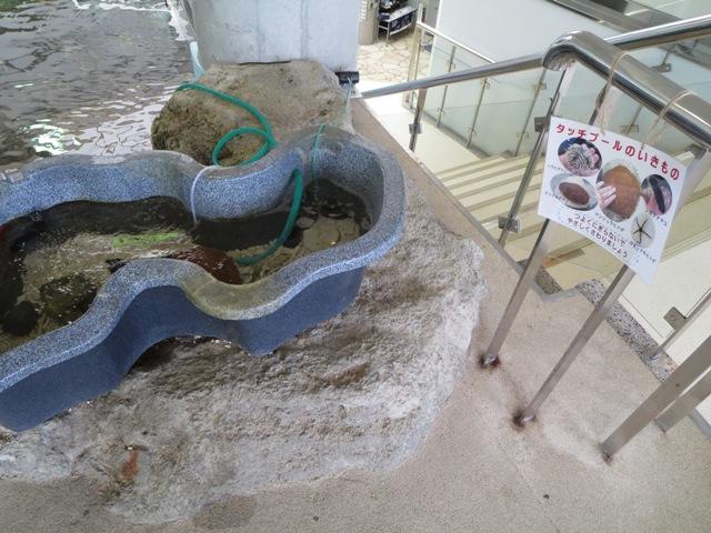 奄美海洋展示館、ナマコやヒトデなどの生物を直接触れるコーナー
