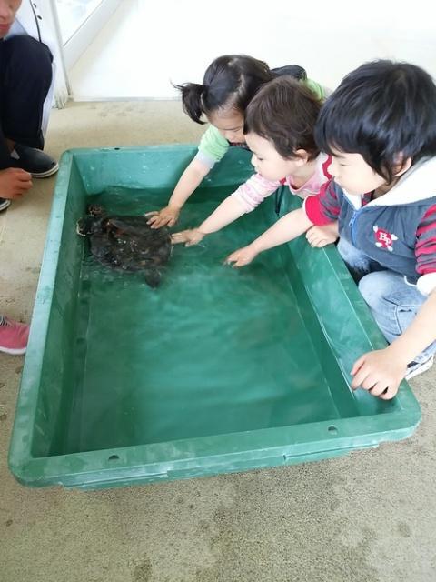奄美海洋展示館、ウミガメの子どもとのふれあい