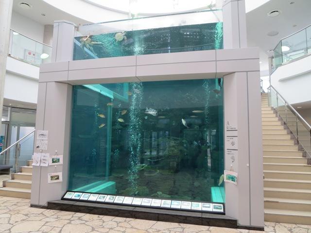 熱帯魚やウミガメの飼育展示をしている大型水槽(奄美海洋展示館)