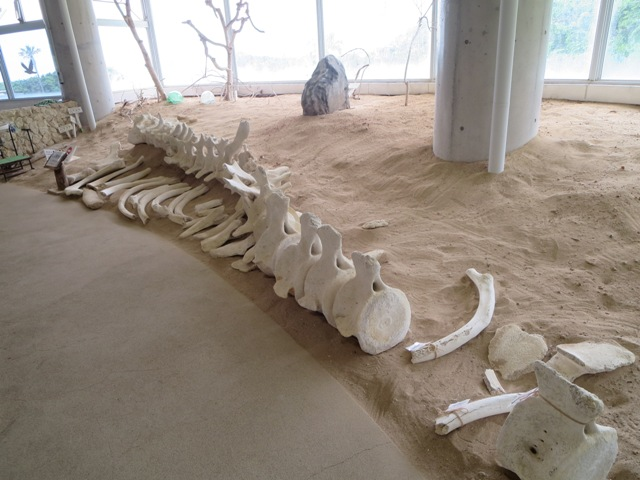 奄美海洋展示館の展示