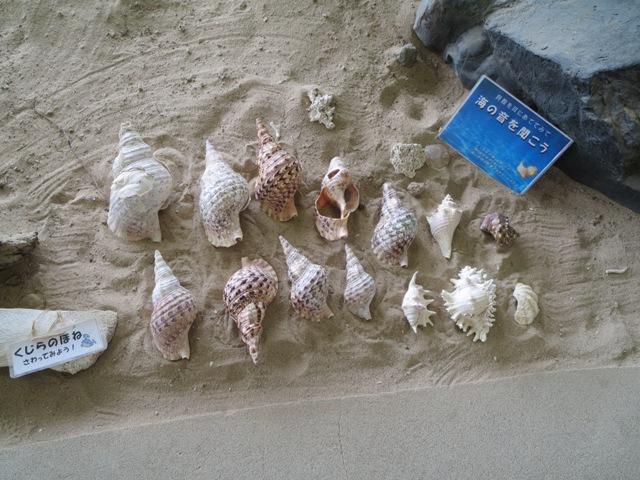 奄美海洋展示館の展示(貝殻)