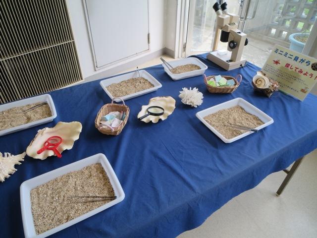 奄美海洋展示館のミニ貝探しコーナー