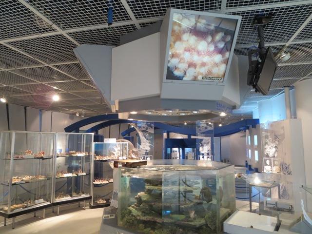 奄美海洋展示館の1階展示室