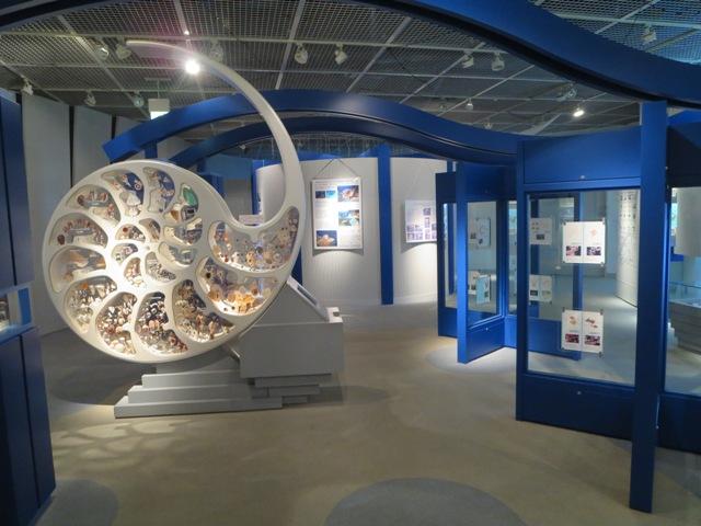 奄美海洋展示館の貝殻の展示方法がユニーク