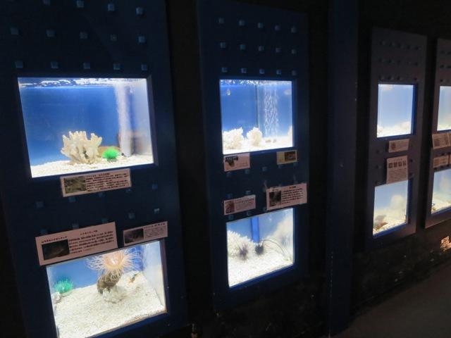 奄美海洋展示館の海藻やエビなどの展示も