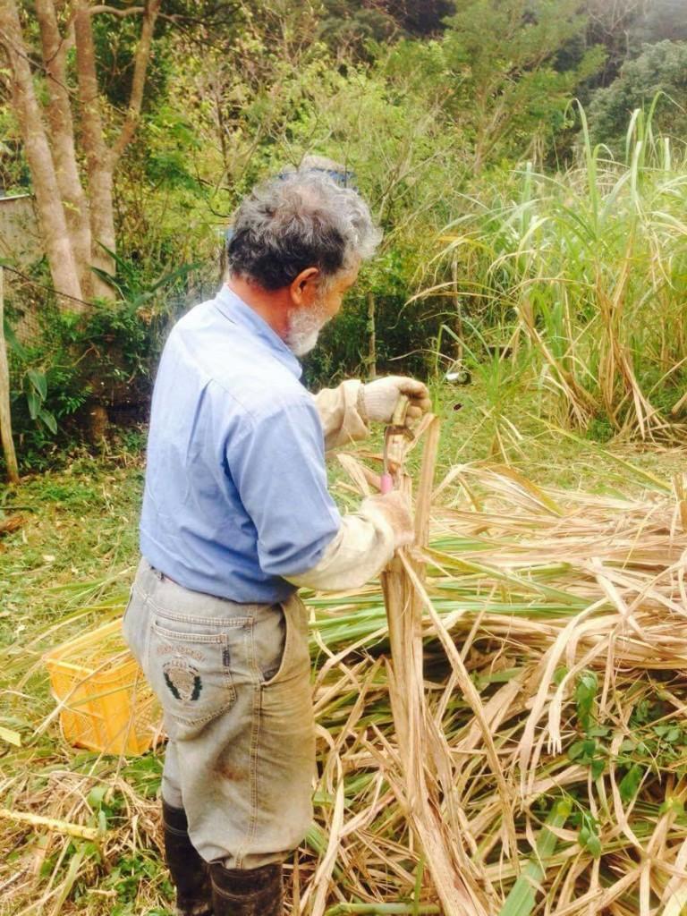 「太陽の黒さとう」自然栽培で育てたさとうきびを手刈りで収穫する