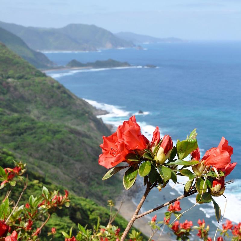 4月下旬はツツジが咲き、斜面が赤く染まる