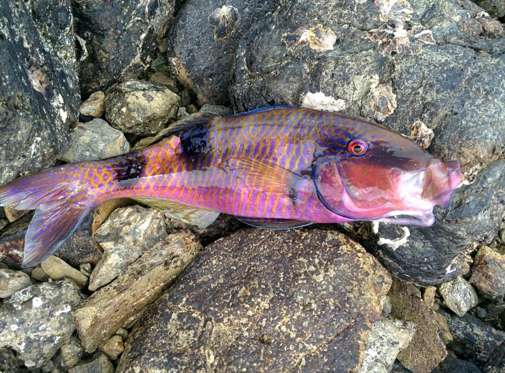 魚のオジサン(奄美)