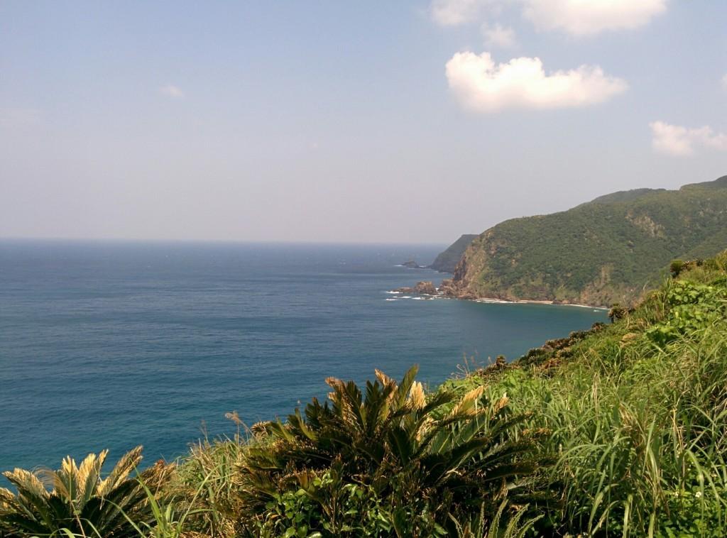 ソテツと海の見える風景