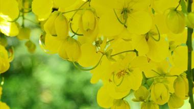 美しさに息をのむ。浴びるような黄金の花と夕陽を楽しむ奄美市住用サンセットコース