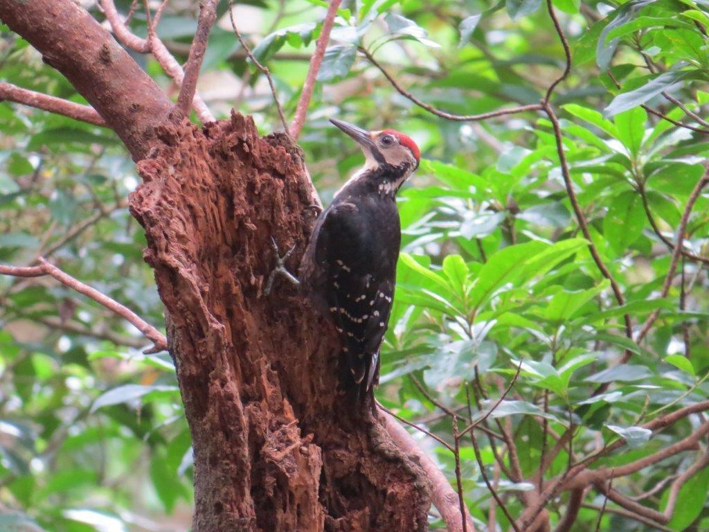 パッと見はカラスのように見えるカラスバト等の野鳥が観察できます。