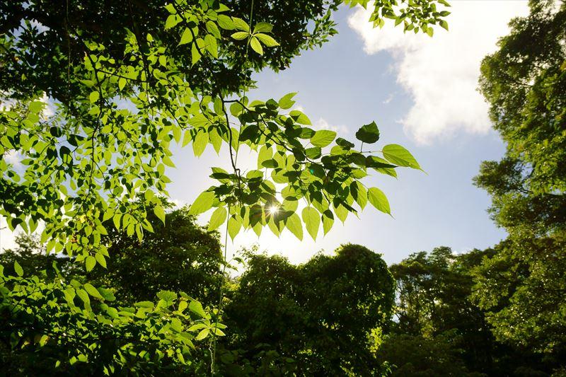 葉っぱから透ける日の光