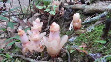 奄美自然観察の森で出会う、奄美大島の動植物【秋~冬編】