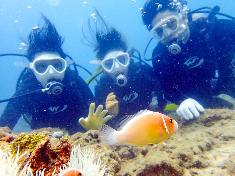 透明度の高い海でダイビングをする女性