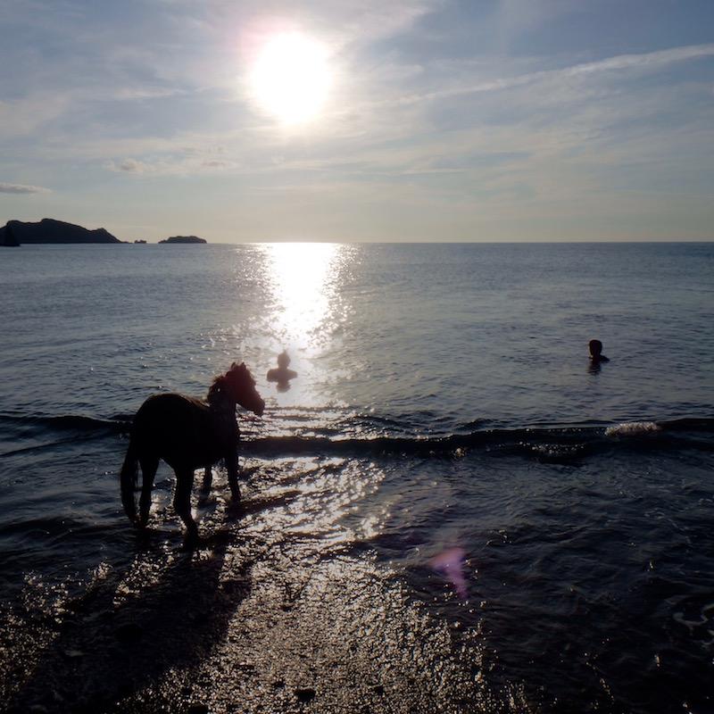 戸円集落、海に入るトカラ馬