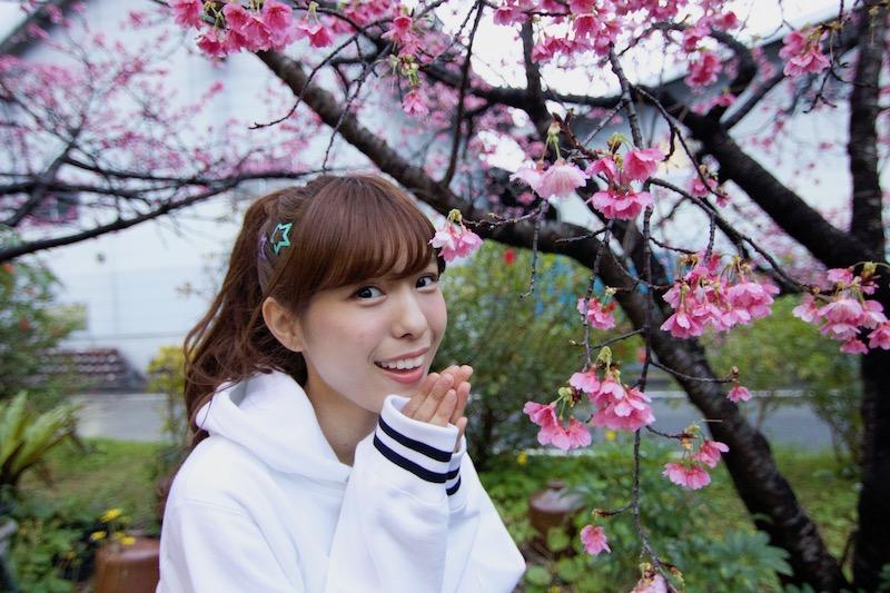 奄美の緋寒桜とAKB48小嶋菜月さん
