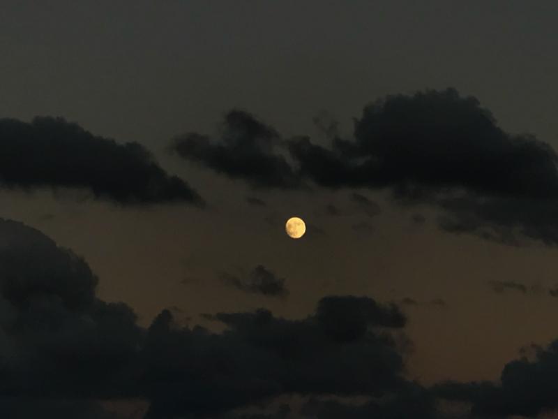 奄美ネイティブシー月