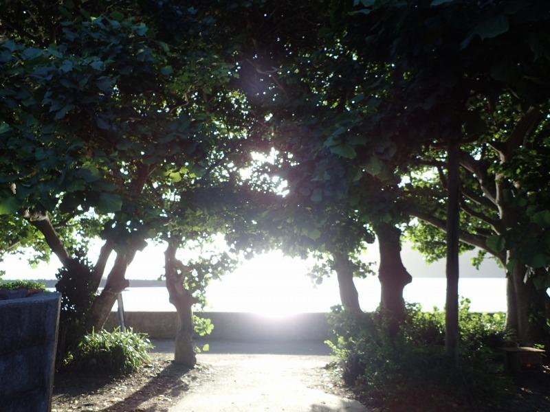 加計呂麻島諸鈍の風景