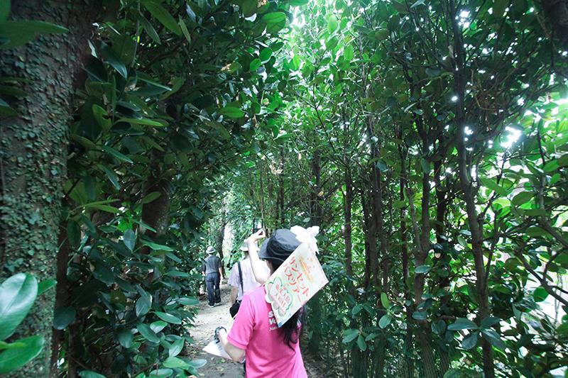 奄美大和村サンセットバスツアーフクギの並木道