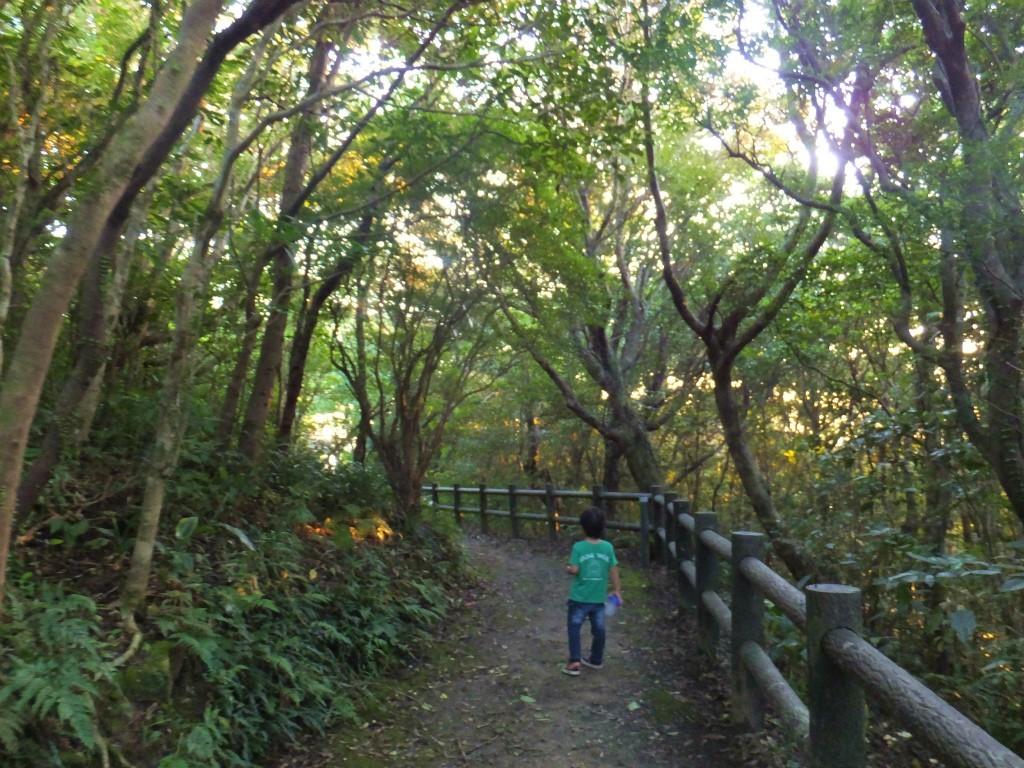 瀬戸内町高知山展望台までのルート