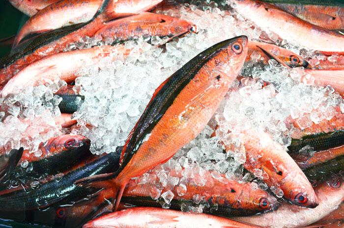 奄美のやっちゃばに並ぶ鮮魚