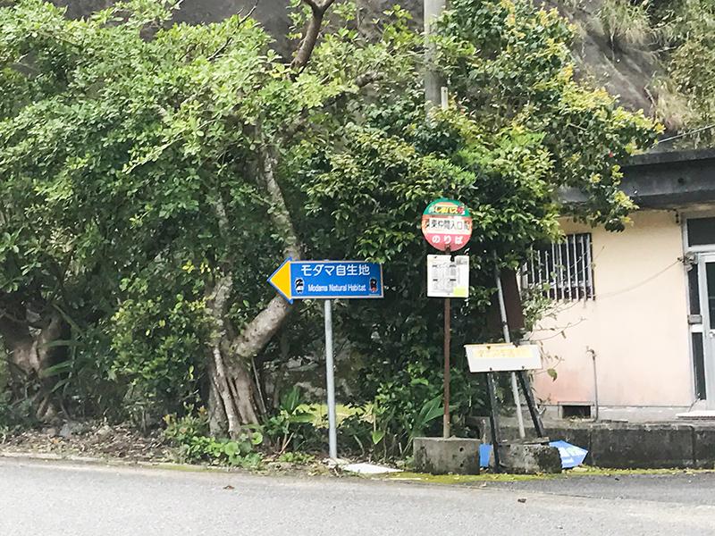 奄美市住用町:モダマ自生地までのルート