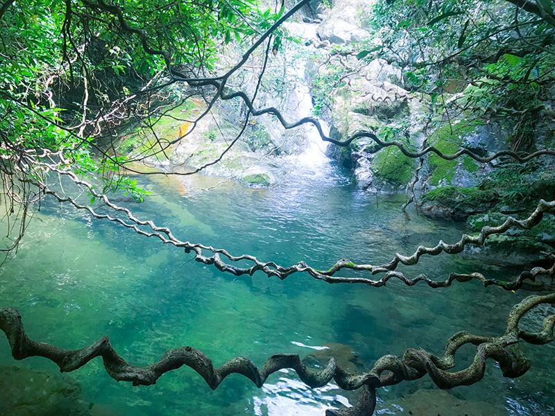 奄美市住用町:モダマのツルと滝壺