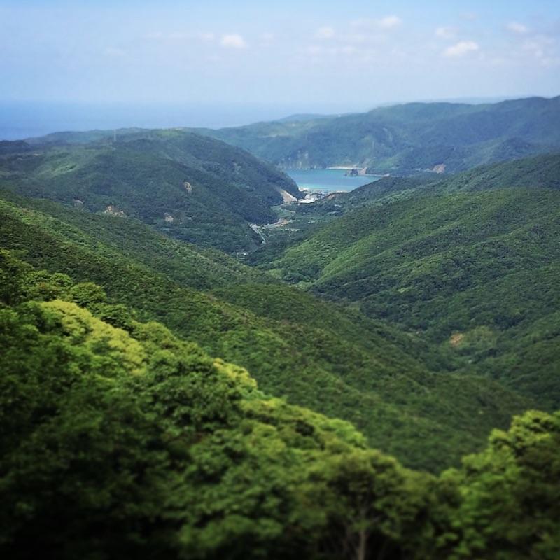 奄美大島の緑深い森林