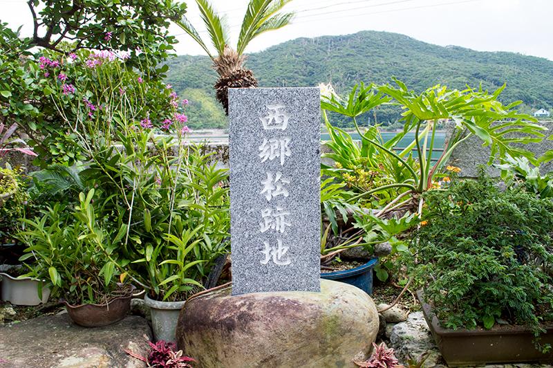 龍郷町「西郷松跡石碑」