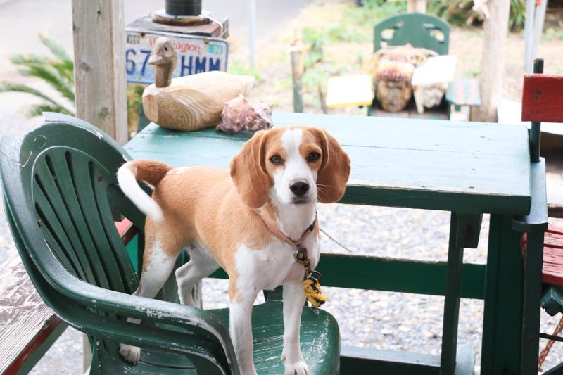 ウェスタナーズカフェと犬
