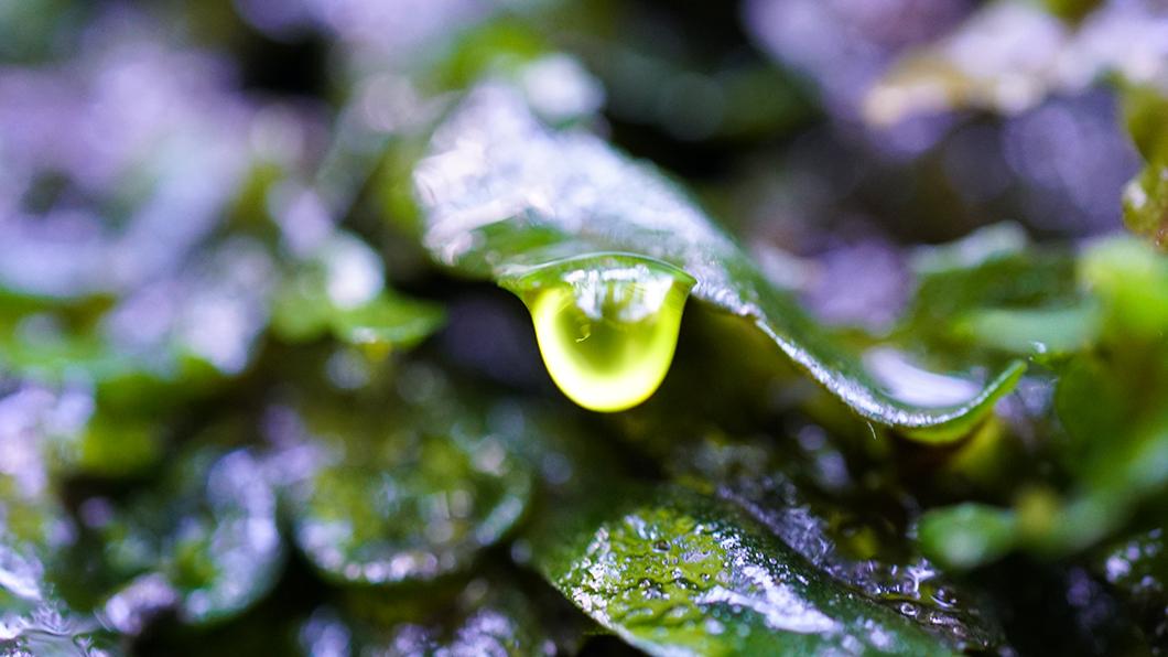 葉から滴り落ちそうな雫